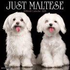 Just Maltese 2021 Wall Calendar (Dog Breed Calendar)