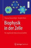 Biophysik in der Zelle