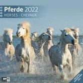 Pferde 2022 Broschürenkalender