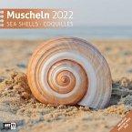 Muscheln Kalender 2022 - 30x30