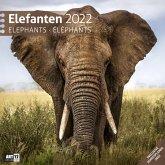 Elefanten 2022 Broschürenkalender