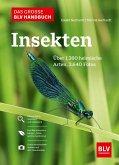 Das große BLV Handbuch Insekten (eBook, ePUB)