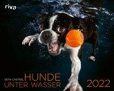Hunde unter Wasser 2022