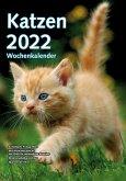 Wochenkalender Katzen 2022