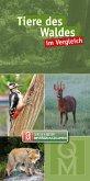 Tiere des Waldes im Vergleich