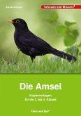 Die Amsel - Kopiervorlagen für die 2. bis 4. Klasse