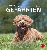 Hunde. Treue Gefährten 2022. Postkartenkalender