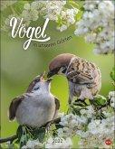 Vögel in unseren Gärten Posterkalender Kalender 2022