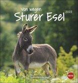 Von wegen sturer Esel 2022. Postkartenkalender