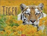 Tiger Kalender 2022