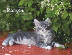 Wegler Katzenkalender 2022 - Wegler, Monika
