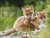 Heimische Wildtiere Kalender 2022