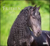 Friesen 2022 - Edle Pferde - Fotografiert von Christiane Slawik - DUMONT-Wandkalender - Format 38,0 x 35,5 cm