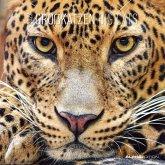 Großkatzen 2022 - Broschürenkalender 30x30 cm