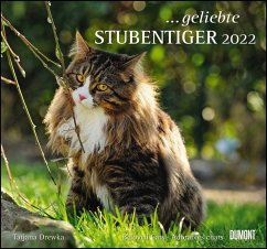 ... geliebte Stubentiger 2022 - DuMont Wandkalender - mit den wichtigsten Feiertagen
