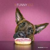 Funny Dogs 2022 - Broschürenkalender 30x30 cm