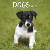 Dogs 2022