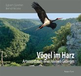 Vögel im Harz