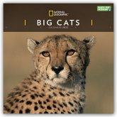 Big Cats - Raubkatzen - Löwen - Tiger - Geparden - Leoparden 2022