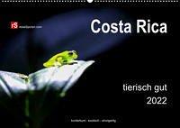 Costa Rica tierisch gut 2022 (Wandkalender 2022 DIN A2 quer)