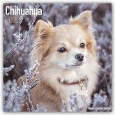 Chihuahuas 2022 - 18-Monatskalender mit freier DogDays-App