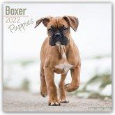 Boxer Puppies - Boxer Welpen 2022 - 18-Monatskalender mit freier DogDays-App