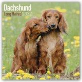 Longhaired Dachshunds - Langhaardackel 2022 - 18-Monatskalender mit freier DogDays-App