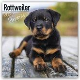 Rottweiler Puppies - Rottweiler Welpen 2022
