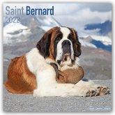 Saint Bernards - Bernhardiner 2022 - 18-Monatskalender mit freier DogDays-App