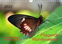 Fliegende Wunderwesen. Schmetterlinge weltweit, ganz nah (Wandkalender 2022 DIN A4 quer)