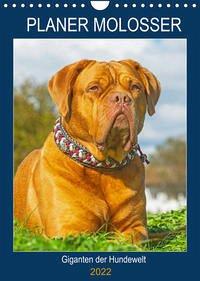 Planer Molosser - Giganten der Hundewelt (Wandkalender 2022 DIN A4 hoch)