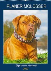 Planer Molosser - Giganten der Hundewelt (Wandkalender 2022 DIN A2 hoch)