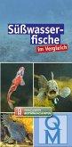 Süßwasserfische im Vergleich