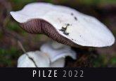Pilze 2022
