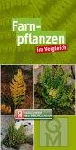 Farnpflanzen im Vergleich