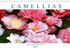Camellias (Wall Calendar 2022 DIN A4 Landscape)