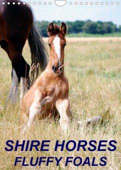 Shire Horses, Fluffy Foals (Wall Calendar 2022 DIN A4 Portrait)