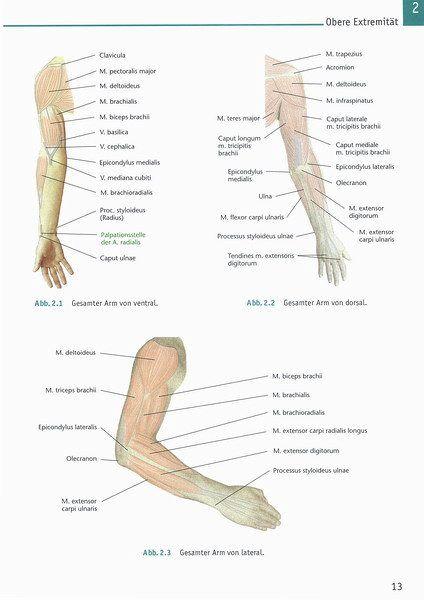 Atlas Anatomie von Karl-Josef Moll; Michaela Moll - Fachbuch - bücher.de