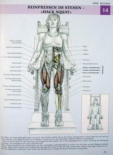 Muskel-Guide speziell für Frauen - Gezieltes Training · Anatomie von ...