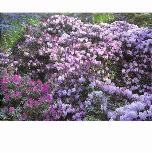 Die Schönsten Gärten Auf Der Welt Swabble: Die Schönsten Gärten Der Welt Von Alain Le Toquin; Jacques