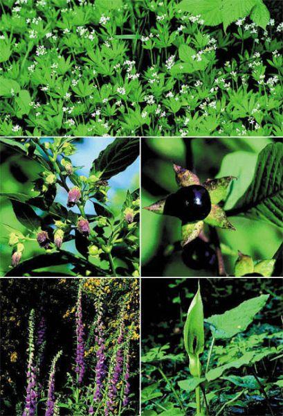 tiere und pflanzen des waldes 140 arten einfach bestimmen von frank hecker buch. Black Bedroom Furniture Sets. Home Design Ideas
