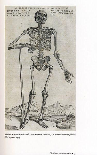 Die Kunst der Anatomie von Benjamin A. Rifkin; Michael J. Ackerman ...
