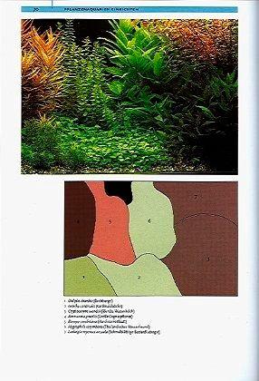 pflanzenaquarien gestalten von christel kasselmann buch. Black Bedroom Furniture Sets. Home Design Ideas