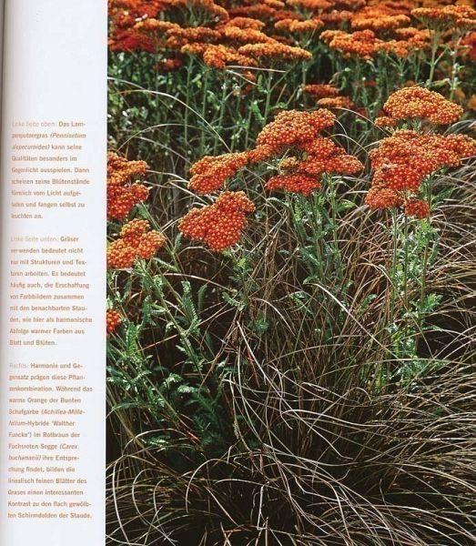 Der moderne staudengarten von ursula barth portofrei bei b bestellen - Gartenarchitektur software ...
