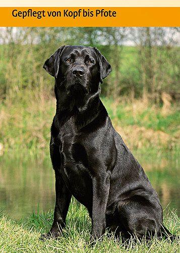 Frau von Labrador Retriever gefickt