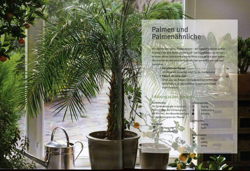 palme ficus co von elisabeth manke buch