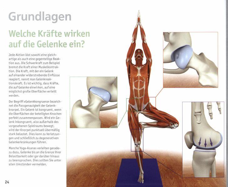 Yoga-Anatomie 3D von Ray Long - Buch - bücher.de