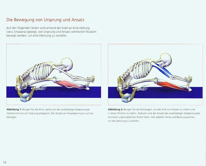 Yoga-Anatomie 3D Bd.2 von Ray Long - Buch - bücher.de