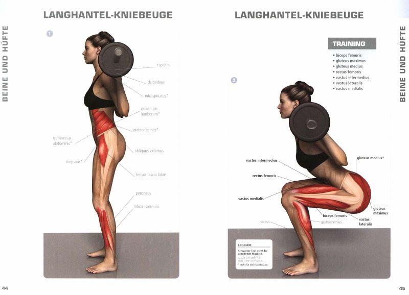 Muskeln - Die Taschenbibel von Pat Manocchia - Buch - bücher.de