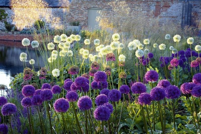 Design mit pflanzen moderne architektur im garten von - Moderne gartenbepflanzung ...